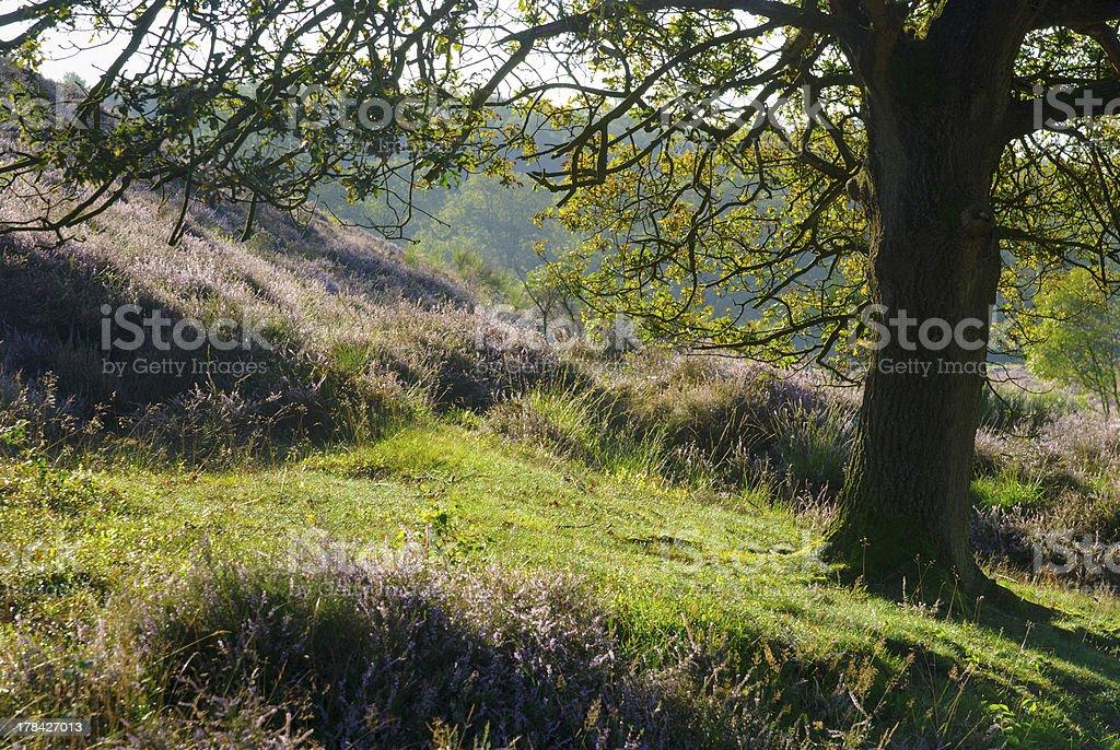 Under the Oak Tree royalty-free stock photo
