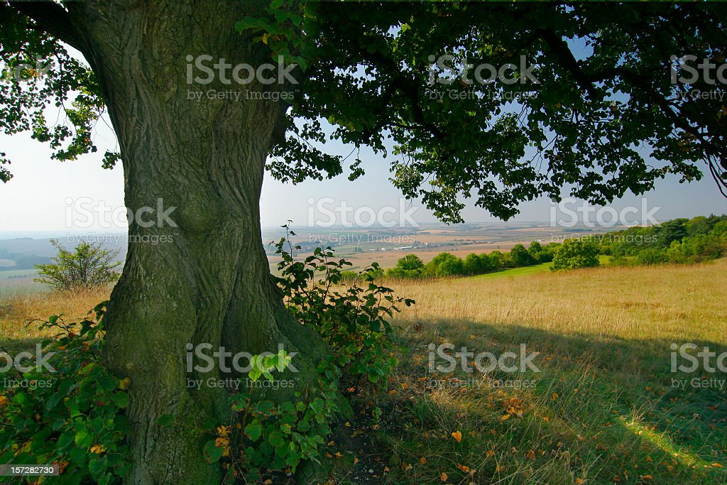 Under the Old Lime Tree royalty-free stock photo