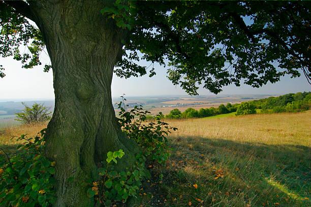 Unter dem alten Lime Tree – Foto
