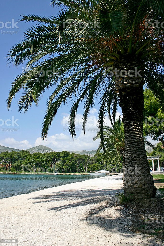 under the palm royalty-free stock photo