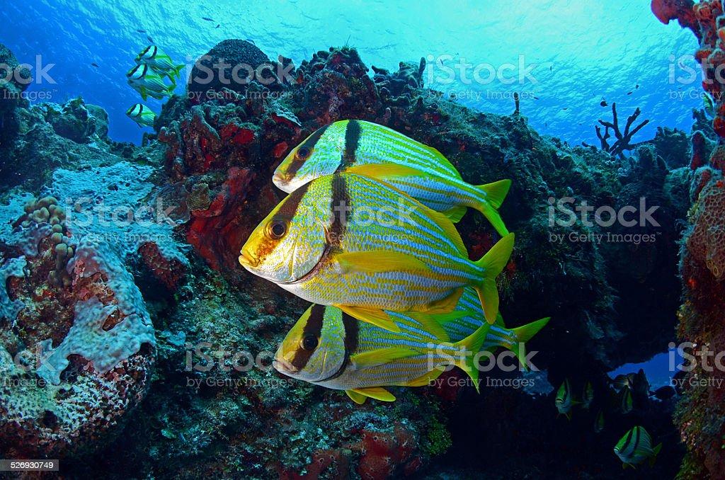 Under the Sea 2 stock photo