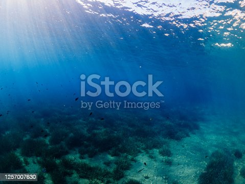 665352250 istock photo Under the sea and Sunbeam 1257007630