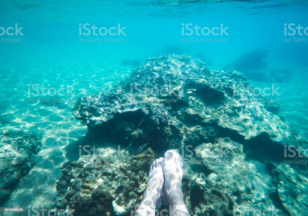 Under the sea Underwater blue dive Island royalty-free stock photo