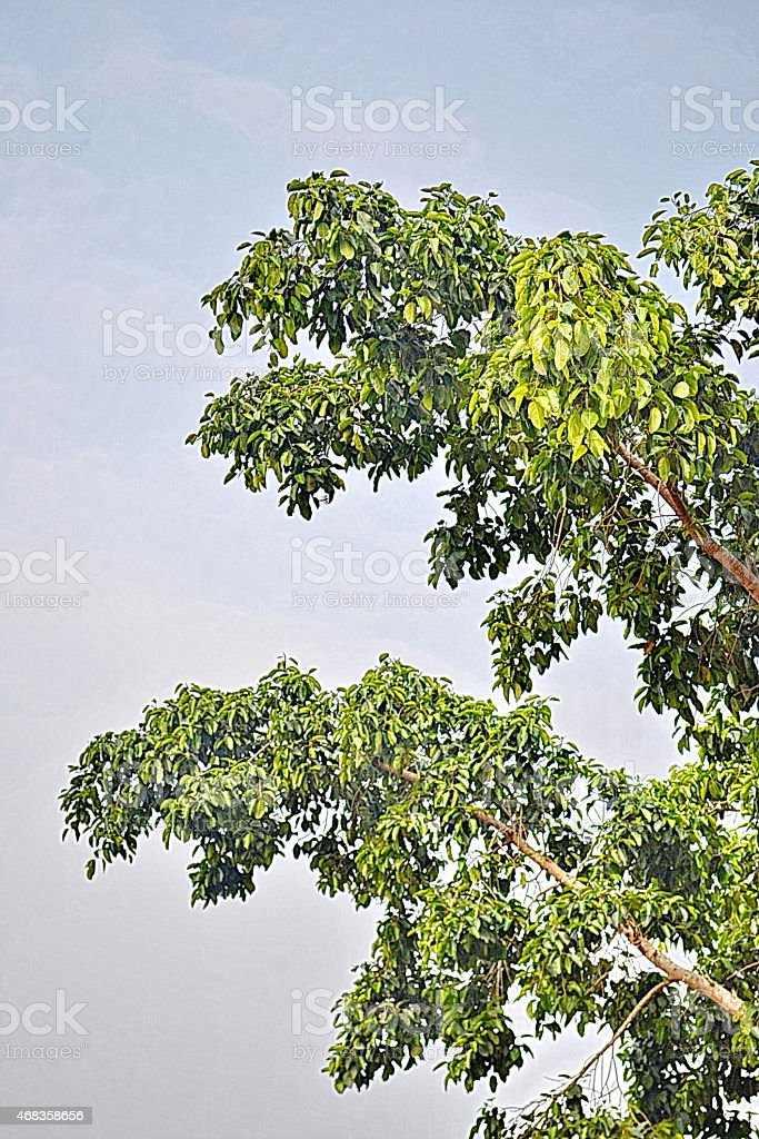Under the shade of a tree. royalty-free stock photo