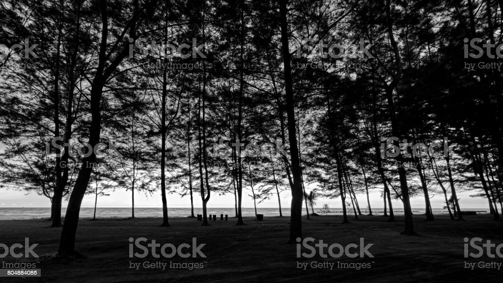 Under The Shadow of Pine Forrest... stock photo