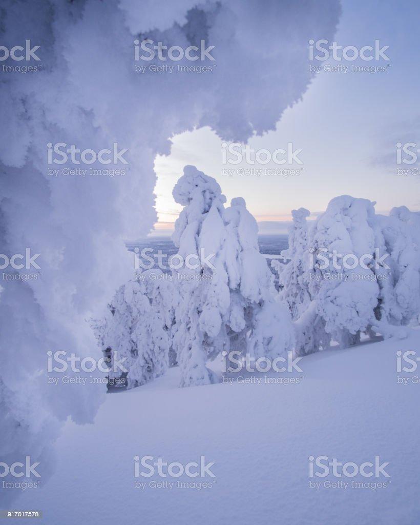 Unter dem schneebedeckten Baum – Foto