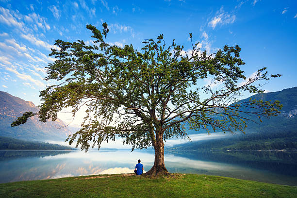 under the tree - beauty in nature stock photos and pictures