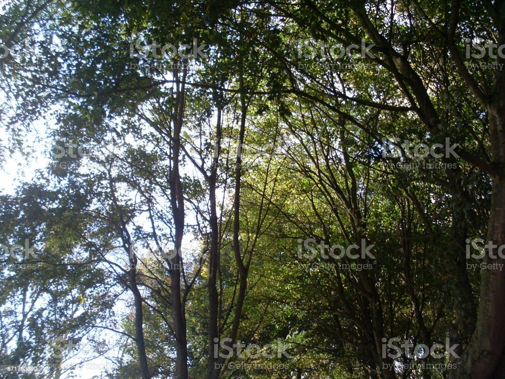 Sous les arbres stock photo