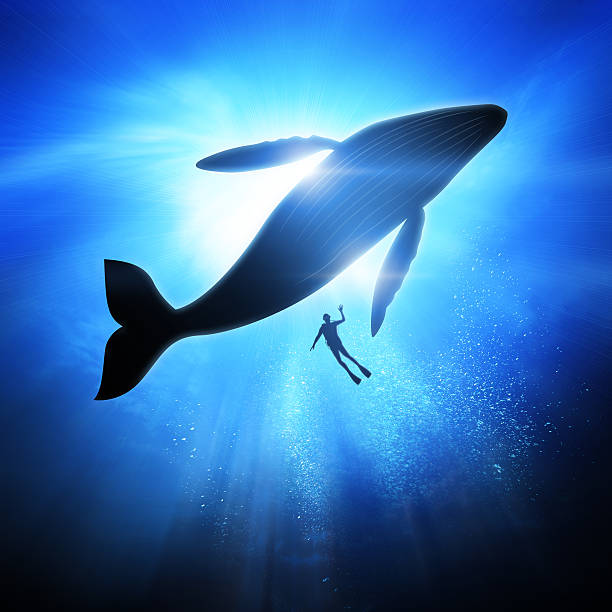 Under The Waves Deep under the ocean, looking up towards a Diver and Humpback Whale. whale stock pictures, royalty-free photos & images