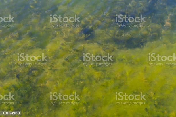 Under water plants picture id1186249291?b=1&k=6&m=1186249291&s=612x612&h=5dsxjx6bcvsn8d6v7j5rbaq8ymrxkkuefhtybngz ws=