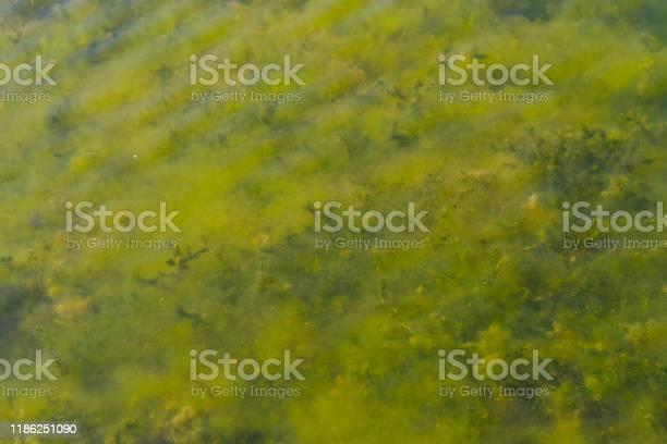 Under water plants picture id1186251090?b=1&k=6&m=1186251090&s=612x612&h=zvhvfydxf7e1emj lesydjmg3kiua7rbeshmn9kurp8=