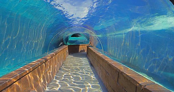 Under Water Shark Walk Atlantis Bahamas stock photo