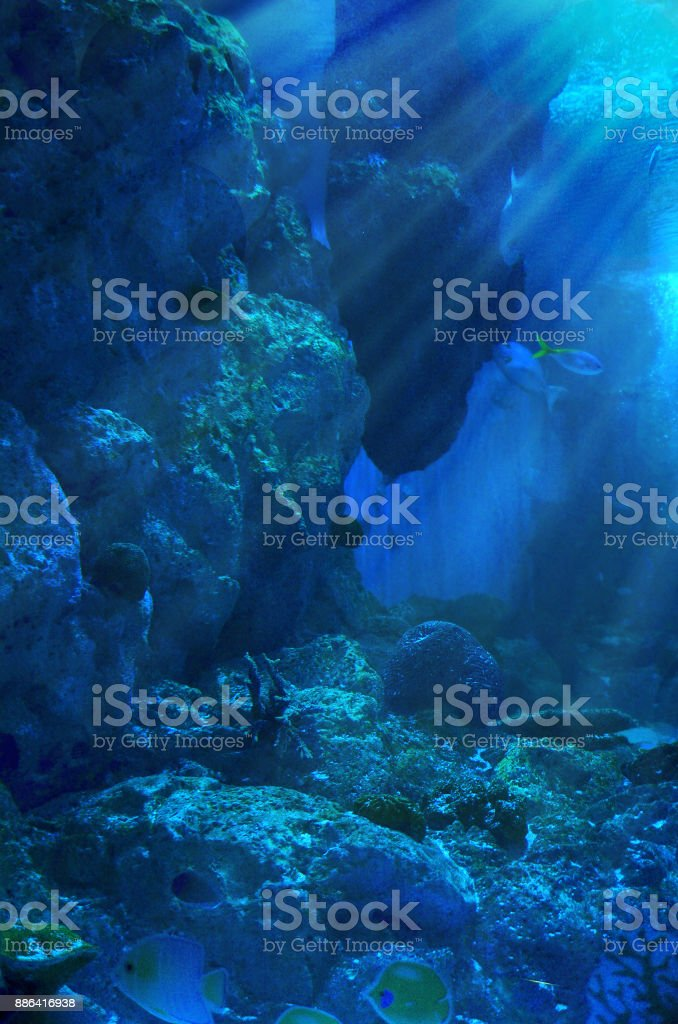 under water wold stock photo