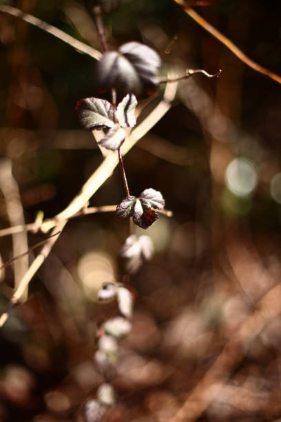 Underbrush – Foto