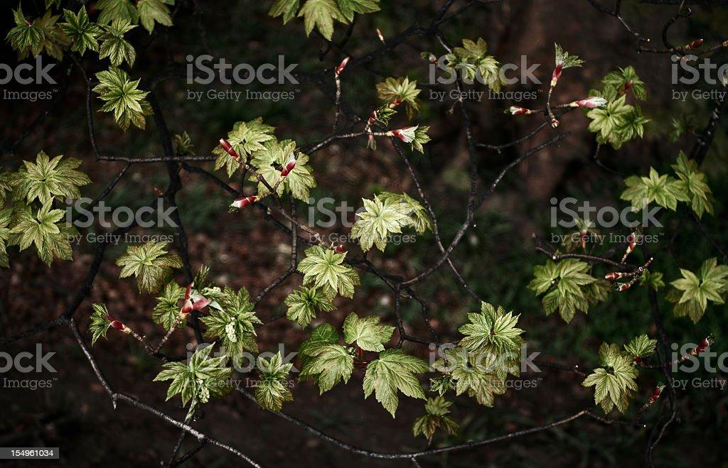 Undergrowth (sottobosco) royalty-free stock photo