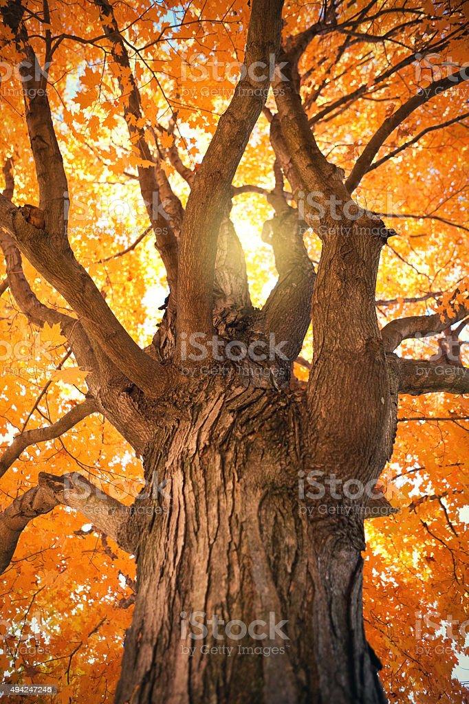 Underneath A Dall Tree stock photo