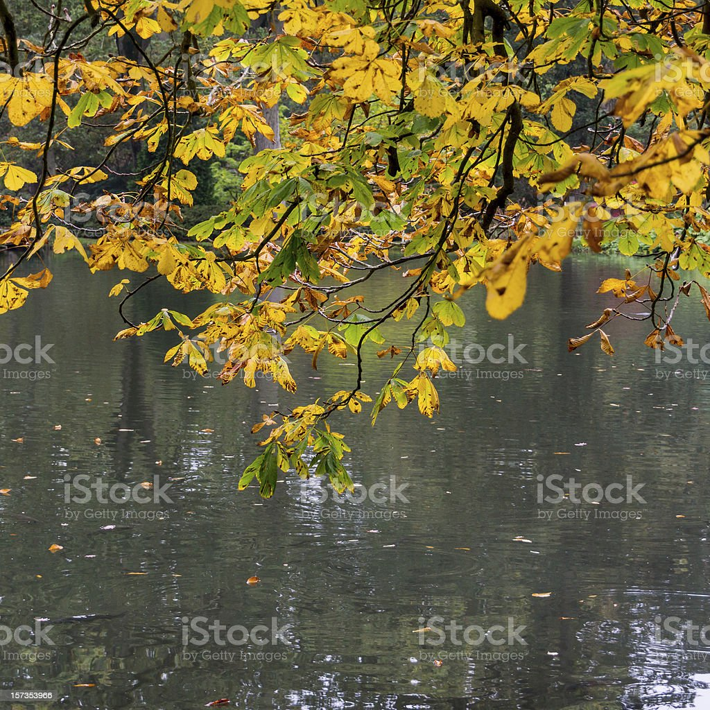 Underneath The Spreading Chestnut Tree stock photo