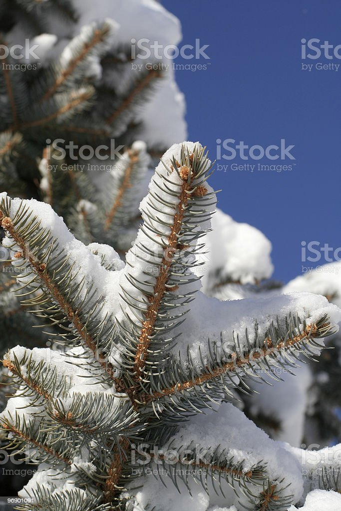 Underneath tree branch with snow on top. royalty-free stock photo