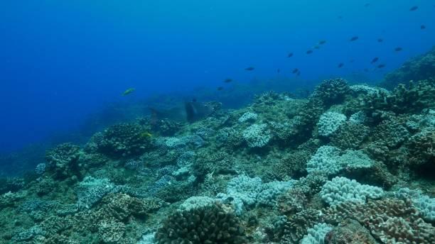 Undersea coral reef at Ogasawara Island, Japan stock photo