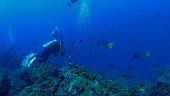 Galapagos Islands, Ecuador - May 8, 2018 : Underwater sea life at Galapagos (2018_0428_0520-05-08_121717_A)