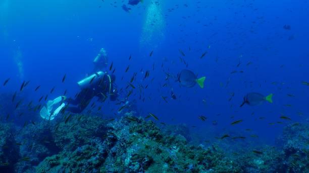 Undersea coral reef, school of fish, Galapagos stock photo