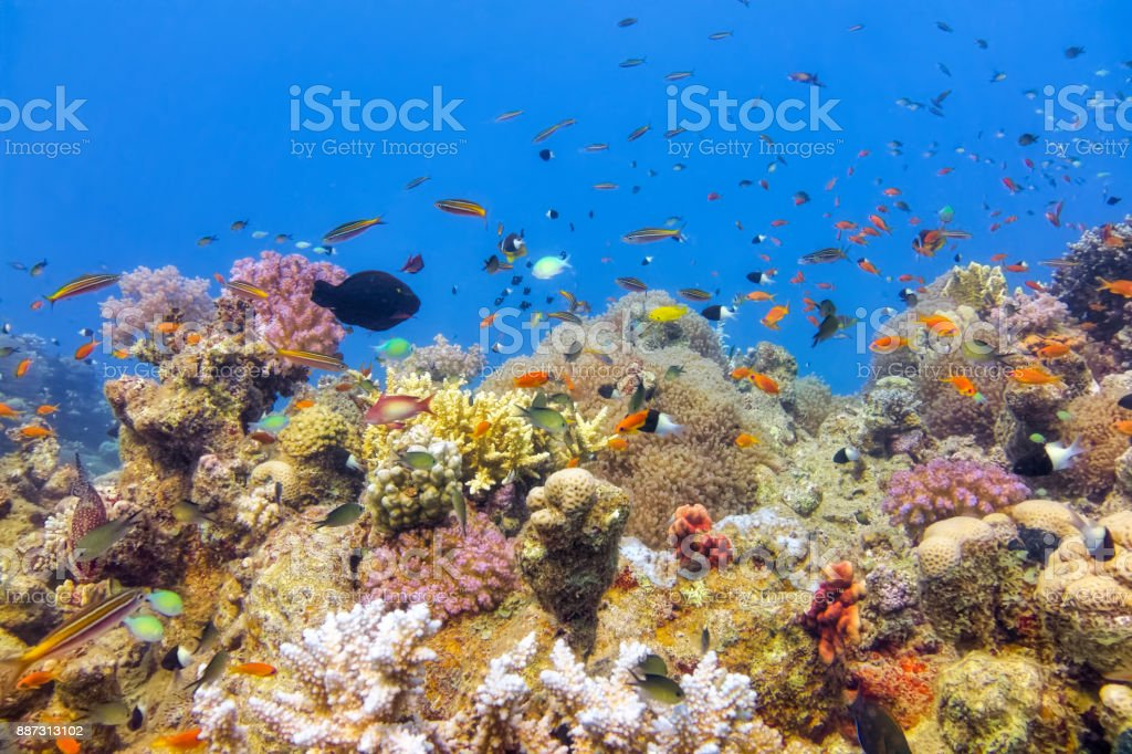 Undersea on beautiful coral reef with lot of tropical Fish in Red Sea - Marsa Alam - Egypt stock photo
