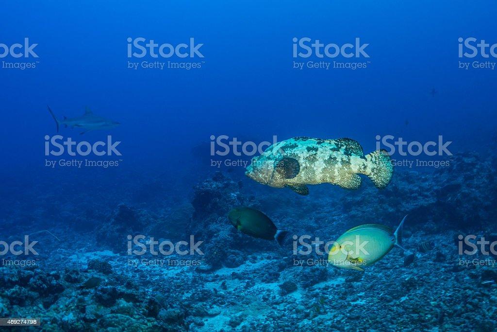 Undersea - Palau stock photo