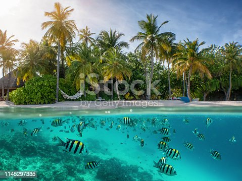 Split view to a tropical beach with palm trees and undersea with colorful fish and corals