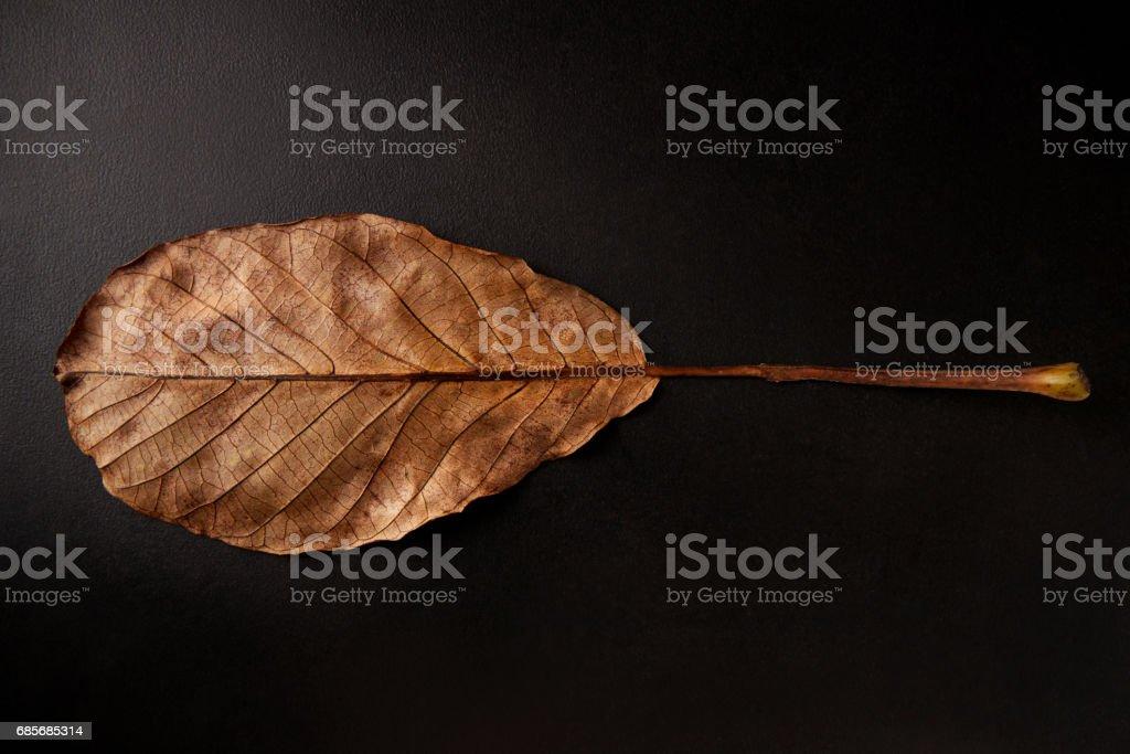 Underside of brown oval leaf on black background, horizontal foto de stock royalty-free