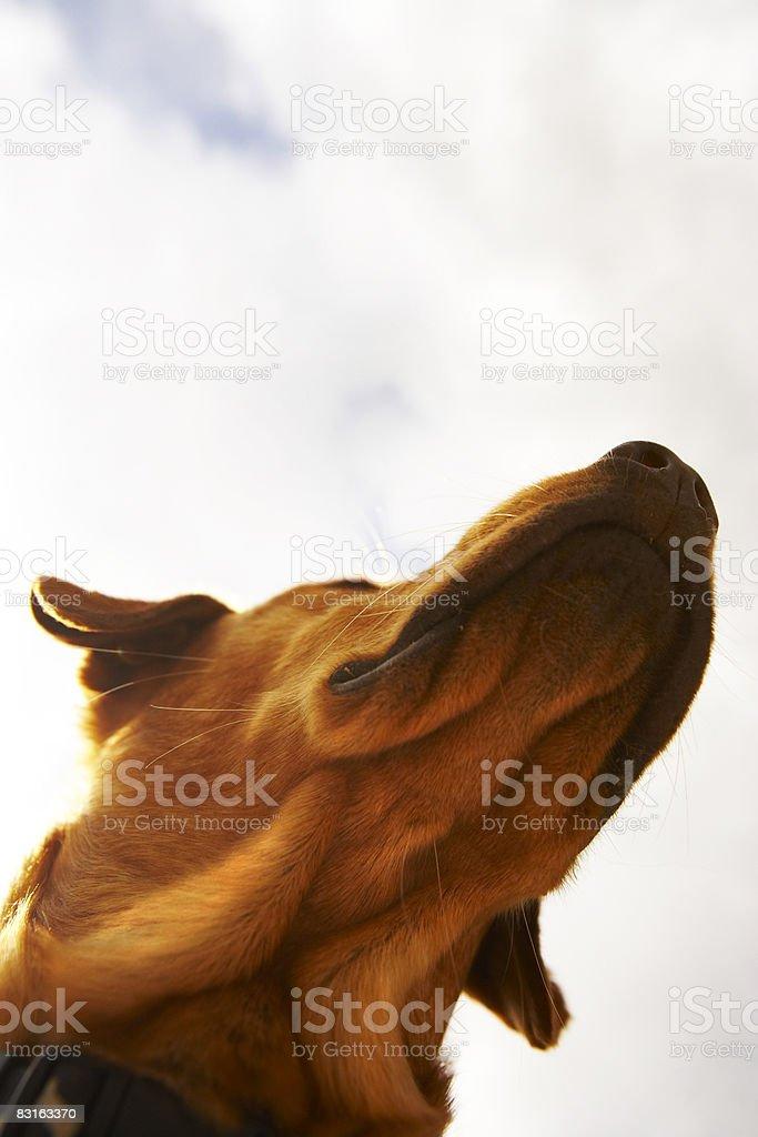 Lato inferiore della testa di cane foto stock royalty-free