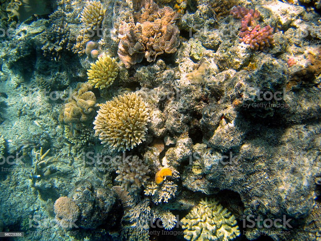 Underwater at Australia's Great Barrier Reef royalty-free stock photo