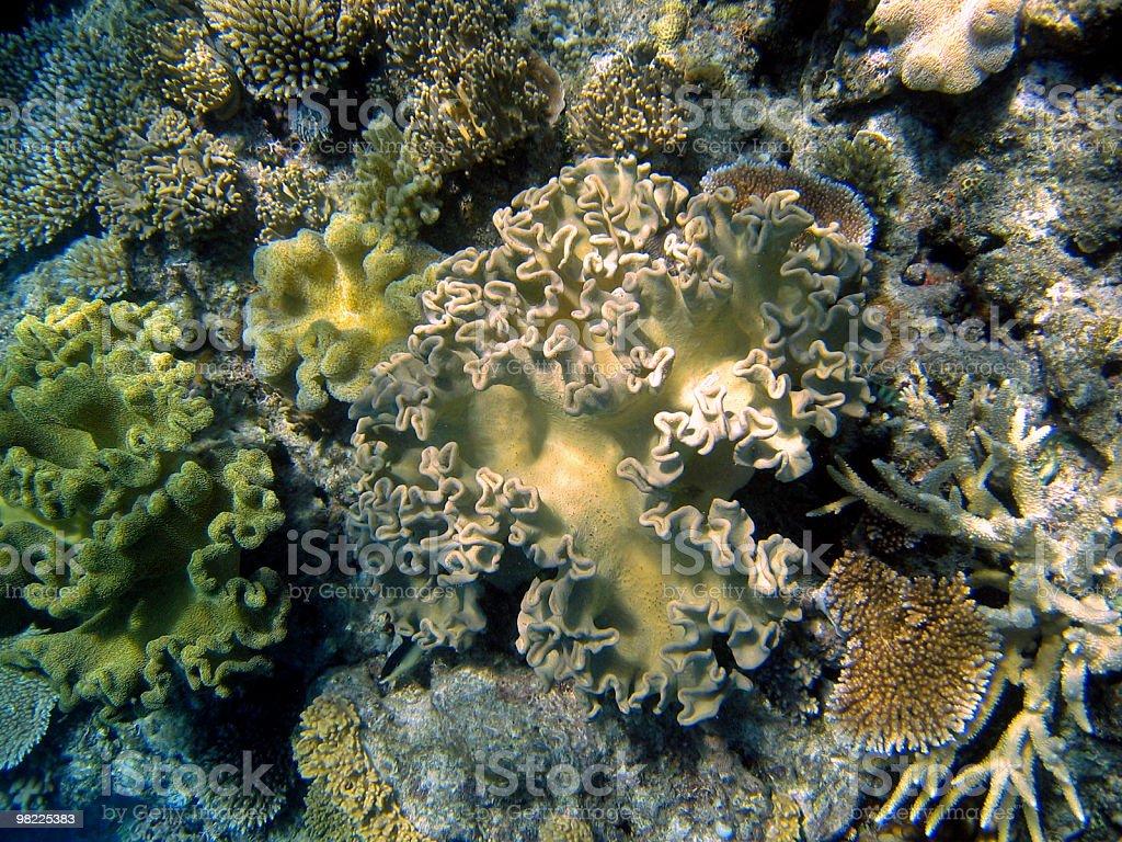 Subacqueo in Australia Grande barriera corallina foto stock royalty-free