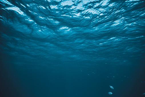 horizontal shot of underwater sea life, fishes swimming.