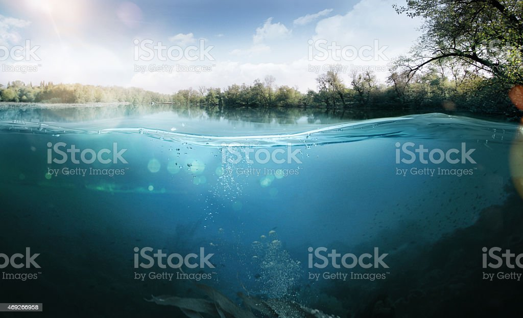 Underwater. Beautiful lake between the green banks