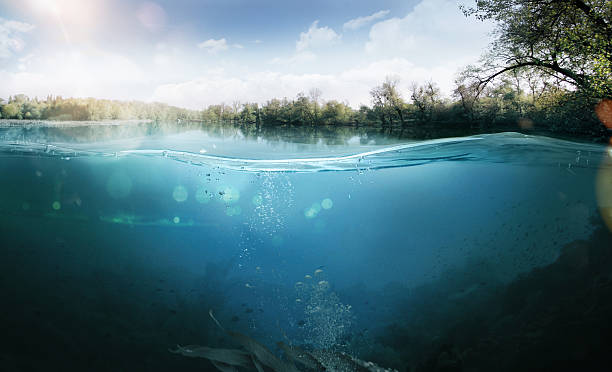 underwater. beautiful lake between the green banks - surface level stock photos and pictures