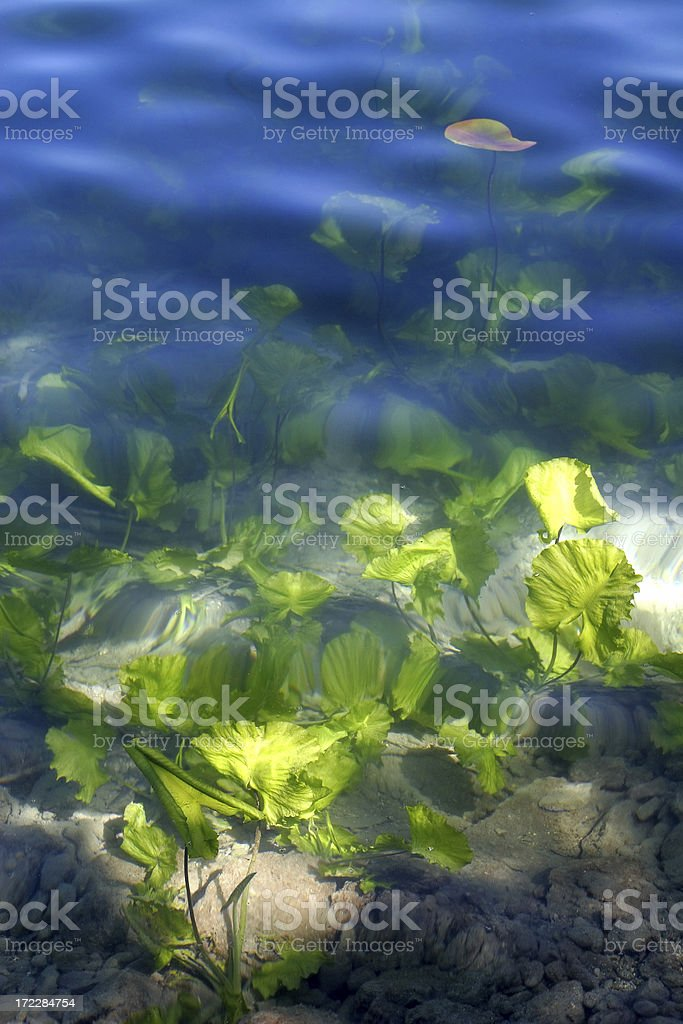 Underwater Beauty royalty-free stock photo