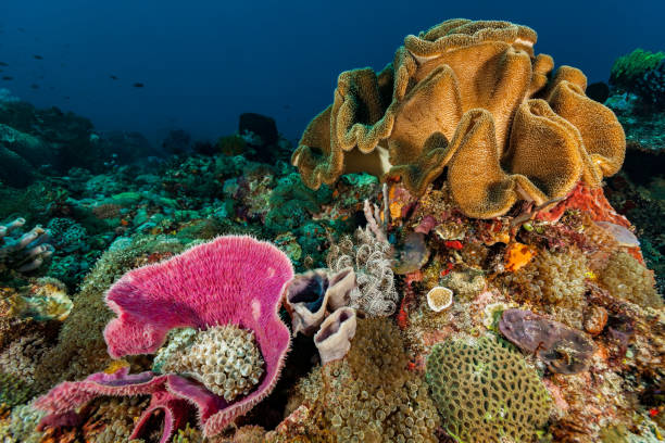 Underwater Biodiversity Hot Spot, Colorful Reef in Pantar Strait, Indonesia stock photo