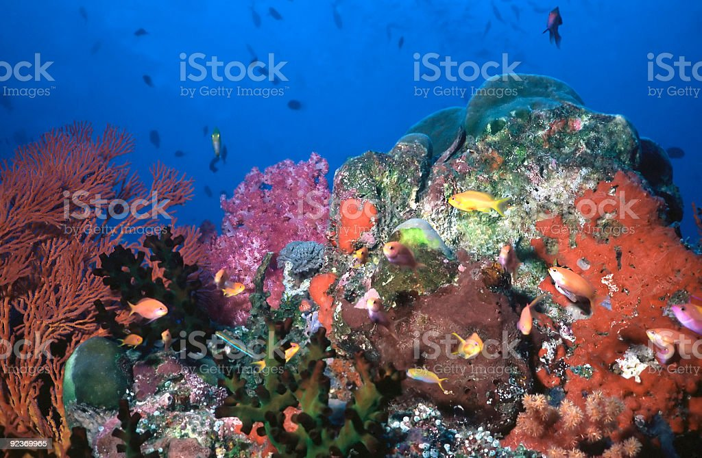 Underwater Candyland royalty-free stock photo