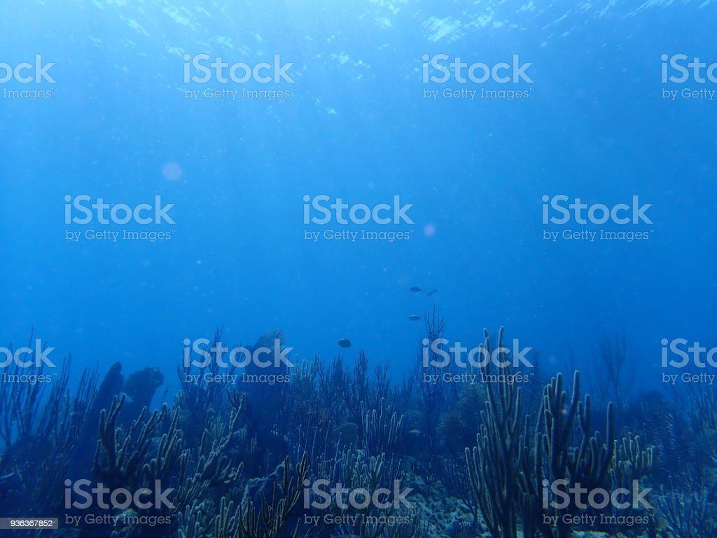 Underwater Caribbean Reef stock photo
