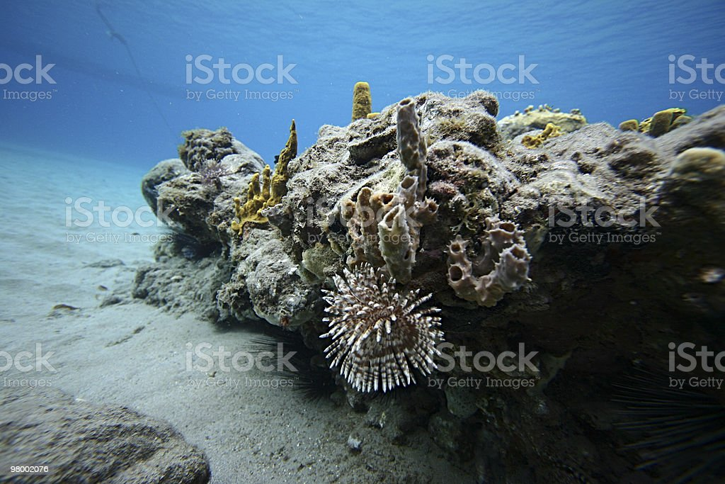 Underwater Carribean Landscape royalty-free stock photo