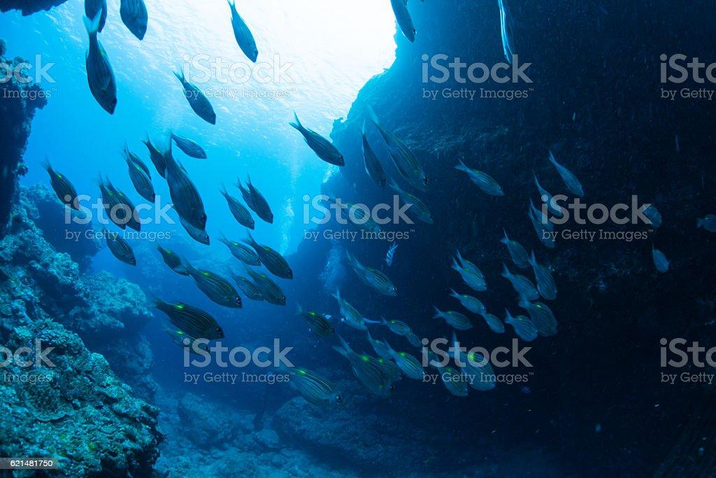Underwater Channel stock photo