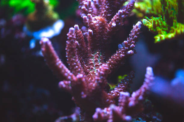 unterwasser korallen nahaufnahme. - coral and mauve stock-fotos und bilder