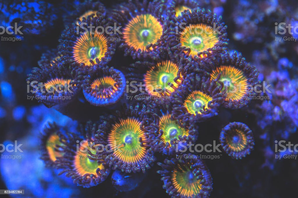 Underwater coral close-up. stock photo