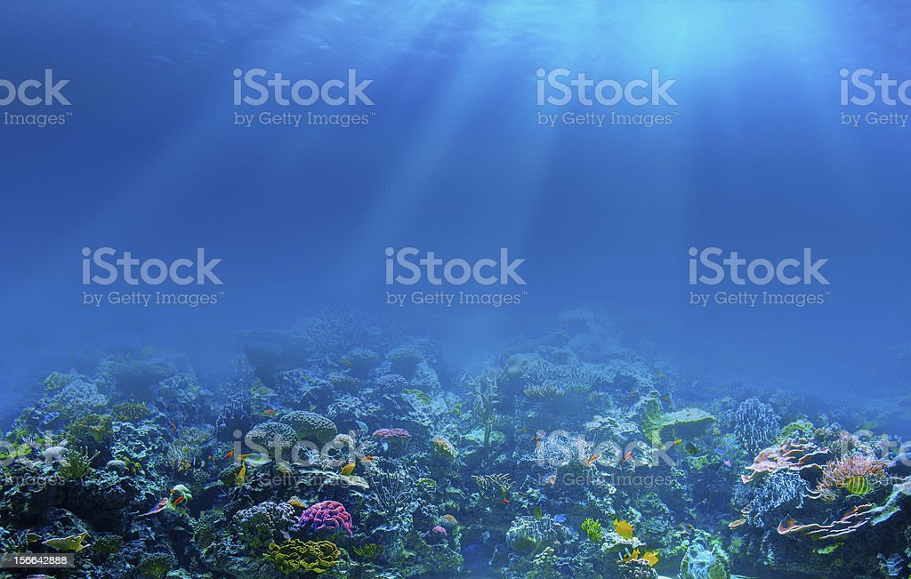Underwater coral reef background stock photo