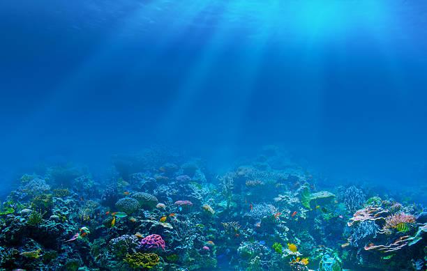 sfondo subacquea coral reef - barriera corallina foto e immagini stock