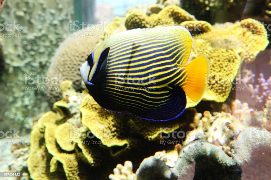 Unterwasser Korallenriff im Roten Meer Lizenzfreies stock-foto