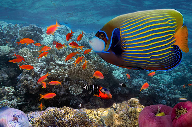Underwater coral reef in sea with tropical fish stock photo