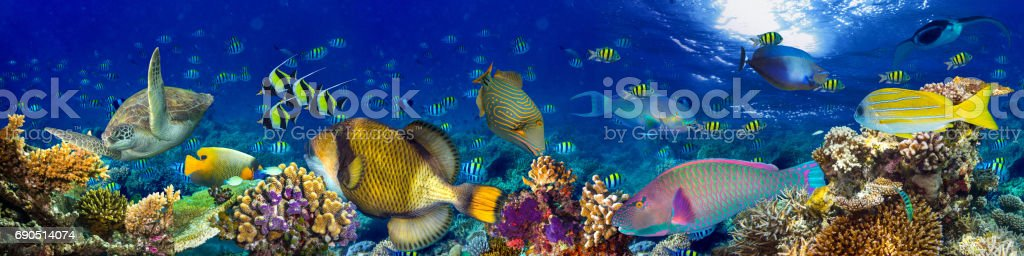 underwater coral reef landscape panorama background stock photo