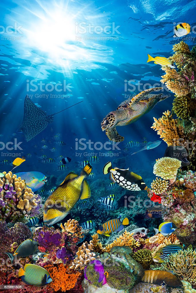 underwater coral reef landscape - Photo