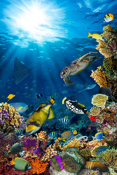 underwater coral reef landscape underwater coral reef landscape in the deep blue ocean with colorful fish and marine life undersea stock pictures, royalty-free photos & images